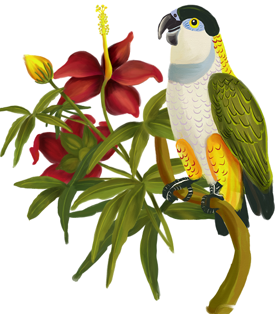 Bird homepage